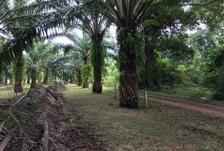 For Sale Land 5-2-9 rai in Mueang Chumphon, Chumphon, Thailand