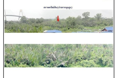 For Sale Land 53-3-27 rai in Phra Pradaeng, Samut Prakan, Thailand