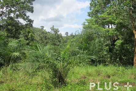 For Sale Land 2-3-93 rai in Phuket, South, Thailand