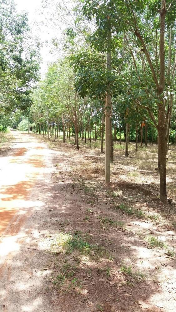 For Sale Land 19-3-81 rai in Seka, Bueng Kan, Thailand | Ref. TH-UJUNNOMI