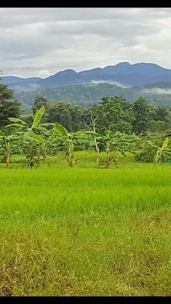 For Sale Land 2 rai in Mae Taeng, Chiang Mai, Thailand | Ref. TH-JJAIZVGT