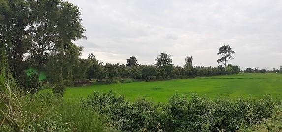 For Sale Land 21 rai in Wang Thong, Phitsanulok, Thailand | Ref. TH-SGXSVSRI