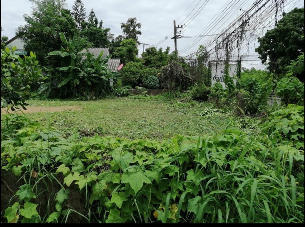 ขาย ที่ดิน 0-1-20 ไร่ สารภี เชียงใหม่ | Ref. TH-KVUUBOVU