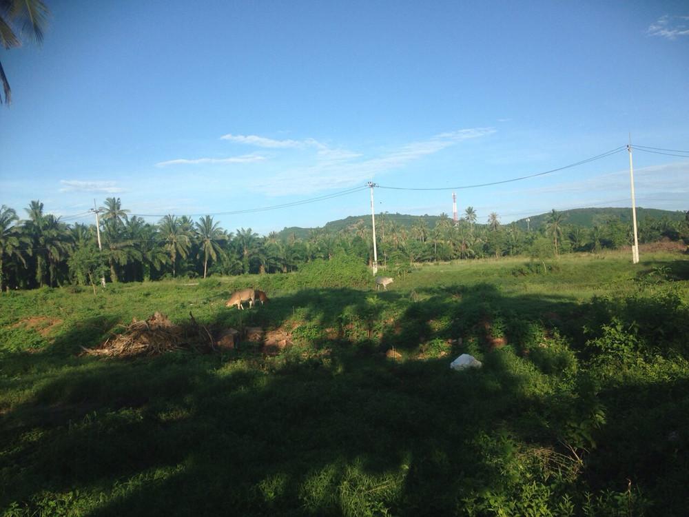 For Sale Land 15 rai in Lang Suan, Chumphon, Thailand | Ref. TH-PKNFHUWJ