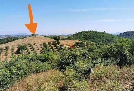 For Sale Land 24,504 sqm in Pak Chong, Nakhon Ratchasima, Thailand