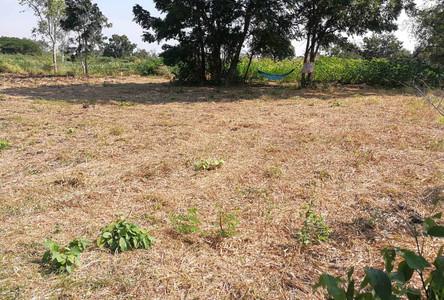 For Sale Land 355 sqwa in Chai Badan, Lopburi, Thailand
