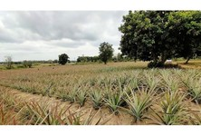 For Sale Land 600 sqm in Mueang Chiang Rai, Chiang Rai, Thailand