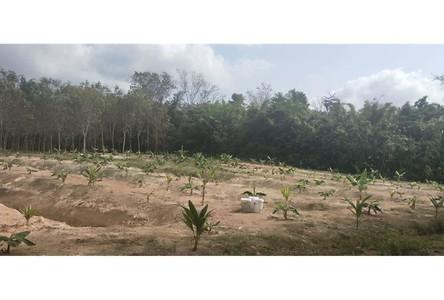 ขาย ที่ดิน 3,200 ตรม. เมืองกระบี่ กระบี่