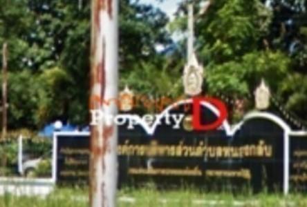 For Sale Land 14-3-22 rai in Nong Bua, Nakhon Sawan, Thailand