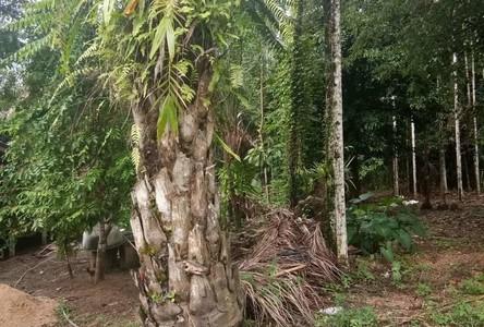 For Sale Land in Kapong, Phang Nga, Thailand