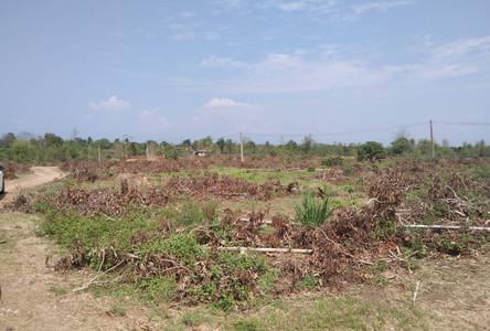 For Sale Land 119 rai in Pa Sang, Lamphun, Thailand