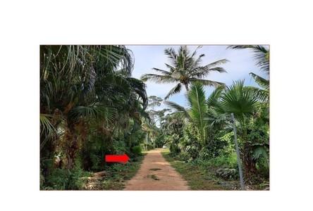 ขาย หรือ เช่า ที่ดิน เกาะสมุย สุราษฎร์ธานี