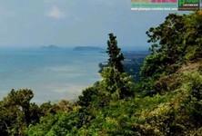 ขาย ที่ดิน 19,200 ตรม. เกาะพะงัน สุราษฎร์ธานี