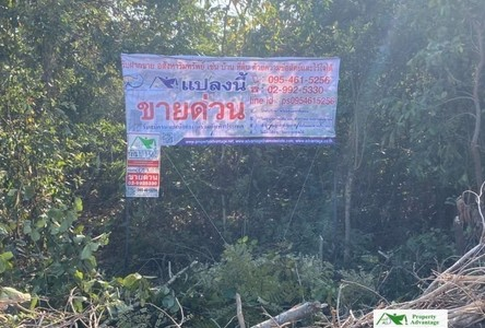 For Sale Land 19,816 sqm in Bueng Kan, Northeast, Thailand