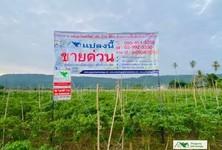 For Sale Land 2,976 sqm in Nong Khai, Northeast, Thailand