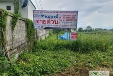 For Sale Land 2,516 sqm in Wiang Pa Pao, Chiang Rai, Thailand