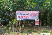 For Sale Land 37,600 sqm in Phanom Dong Rak, Surin, Thailand
