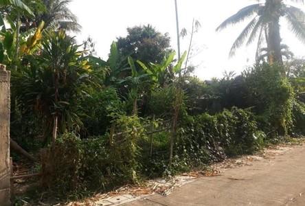 For Sale Land 388 sqm in Mae Sai, Chiang Rai, Thailand
