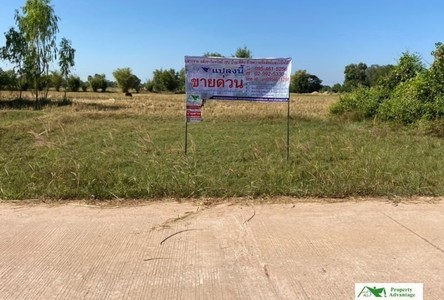 For Sale Land 400 sqm in Nong Saeng, Udon Thani, Thailand