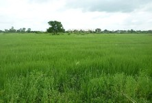 For Sale Land 8,028 sqm in Lam Luk Ka, Pathum Thani, Thailand