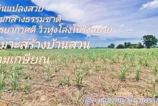 For Sale Land in Nong Ya Sai, Suphan Buri, Thailand