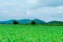 For Sale Land 400 sqm in U Thong, Suphan Buri, Thailand