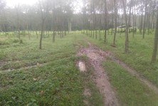 ขาย ที่ดิน ท้ายเหมือง พังงา