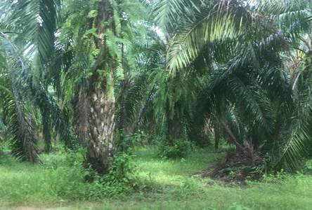 For Sale Land 432,000 sqm in Ao Luek, Krabi, Thailand