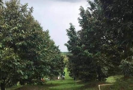 ขาย ที่ดิน มะขาม จันทบุรี