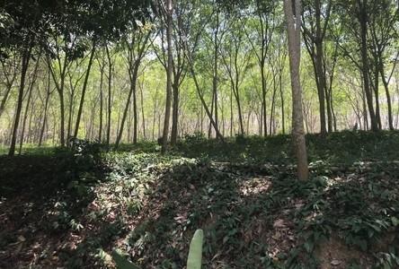 For Sale Land 25,900 sqm in Takua Thung, Phang Nga, Thailand
