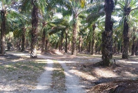 For Sale Land 48,000 sqm in Thai Mueang, Phang Nga, Thailand