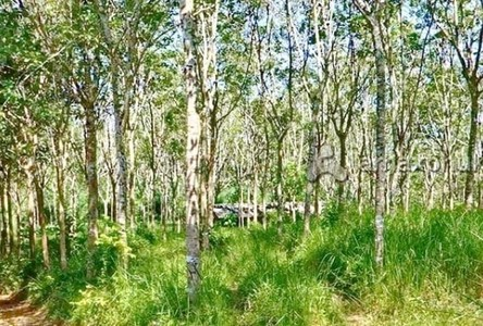 For Sale Land 36,456 sqm in Thalang, Phuket, Thailand