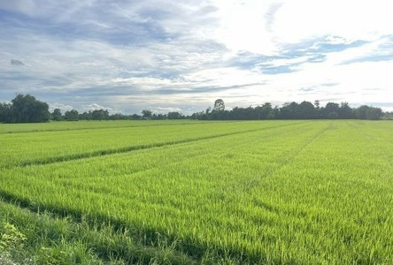 For Sale Land 7,600 sqm in Ban Na, Nakhon Nayok, Thailand