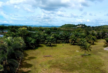 For Sale Land 10,000 sqm in Thalang, Phuket, Thailand