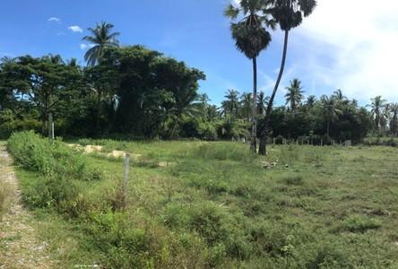For Sale Land 262 sqm in Tha Sala, Nakhon Si Thammarat, Thailand