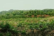 For Sale Land 17 rai in Wichian Buri, Phetchabun, Thailand