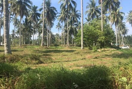 For Sale Land 6,400 sqm in Takua Thung, Phang Nga, Thailand