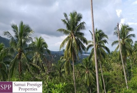 For Sale Land 6,556 sqm in Ko Samui, Surat Thani, Thailand