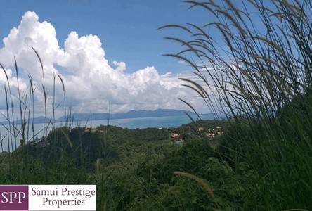 For Sale Land 2,236.4 sqm in Surat Thani, South, Thailand