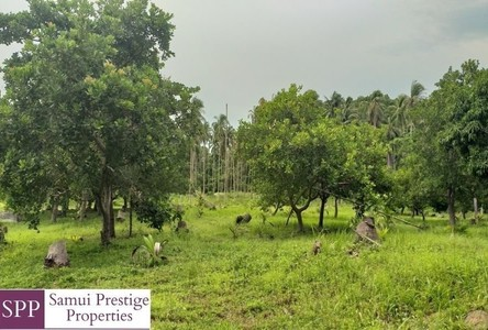 For Sale Land 3,144 sqm in Surat Thani, South, Thailand