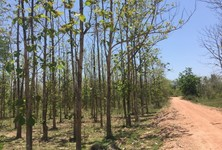 For Sale Land in Hang Chat, Lampang, Thailand
