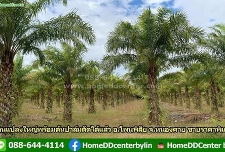 For Sale Land 1,000,000 sqm in Phon Phisai, Nong Khai, Thailand