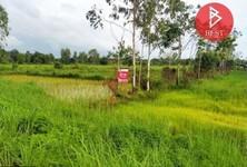 For Sale Land 4,800 sqm in Bueng Khong Long, Bueng Kan, Thailand
