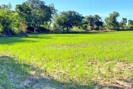 For Sale Land 8,384 sqm in Det Udom, Ubon Ratchathani, Thailand