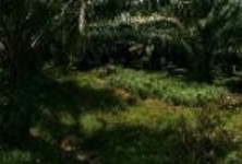 For Sale Land 12,800 sqm in Takua Thung, Phang Nga, Thailand