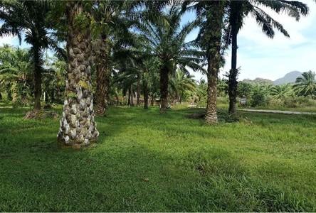 For Sale Condo 1,600 sqm in Mueang Krabi, Krabi, Thailand