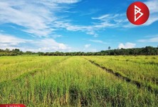 For Sale Land 7,508 sqm in Seka, Bueng Kan, Thailand