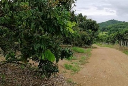 For Sale Land 19,200 sqm in Li, Lamphun, Thailand
