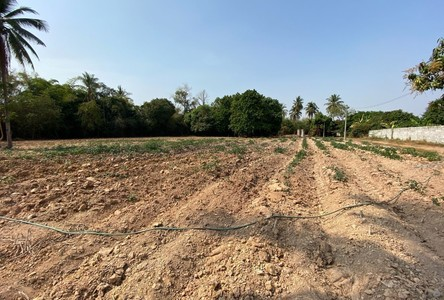 For Sale Land 9,672 sqm in Mueang Phitsanulok, Phitsanulok, Thailand