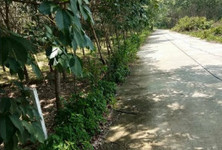 For Sale Land 3,340 sqm in Chana, Songkhla, Thailand